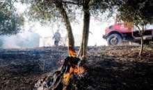 Επιστρατεύονται κατσίκες για την πρόληψη των δασικών πυρκαγιών στην Πορτογαλία