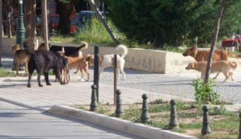 Ανακοίνωση Δήμου Βέροιας για την σίτιση των αδέσποτων ζώων
