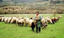 Σε ισχύ νέα μέτρα ελέγχου της αγοράς γάλακτος για την προστασία των κτηνοτρόφων μας